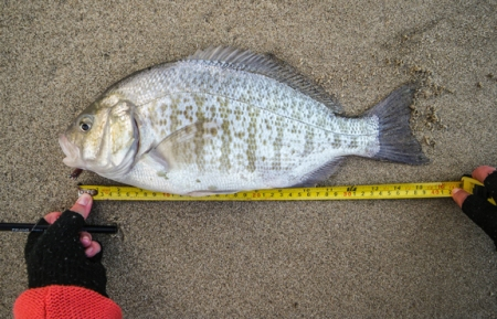 The big fish. looking at the measurement it might have been closer to 16! grin. photo by Al Q